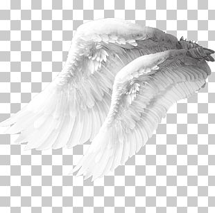 Angel Wing Columbidae Bird PNG