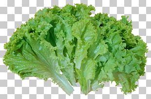 Iceberg Lettuce Caesar Salad Romaine Lettuce Vegetable PNG