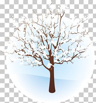Tree Winter Branch PNG