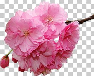 Flower Spring Branch PNG