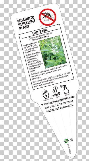 Catnip Plants Perennial Plant Basil Lavender PNG