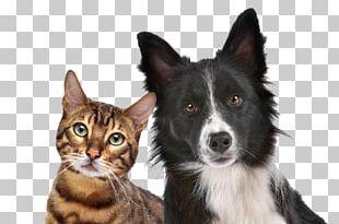 Dog–cat Relationship Dog–cat Relationship Kitten Pet PNG