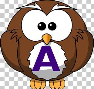Owl Bird Cartoon PNG