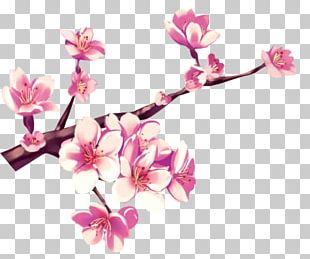 Cherry Blossom Flower Pink Gouache PNG