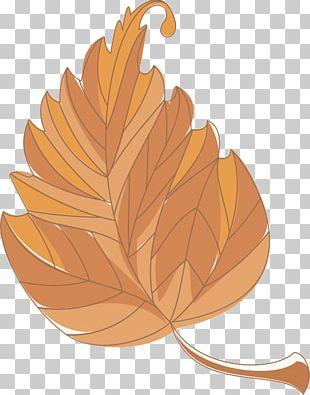 Autumn Leaf Color Deciduous PNG