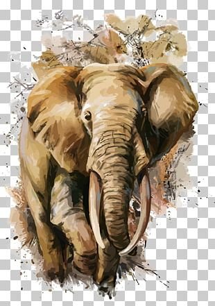 African Elephant T-shirt Watercolor Painting PNG
