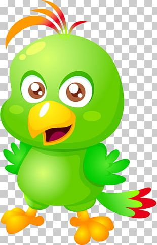 Pirate Parrot Cartoon PNG