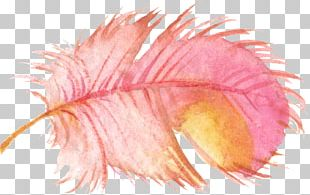 Bird Feather Watercolor Painting PNG
