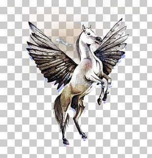 Pegasus Horse Drawing PNG