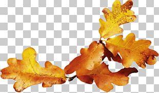 Autumn Leaf Color Autumn Leaf Color Yellow PNG