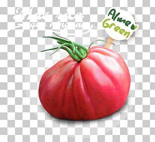 Beefsteak Tomato Food Greenhouse Vegetarian Cuisine PNG