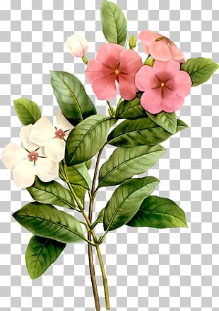 Flower Watercolor Painting Plant PNG