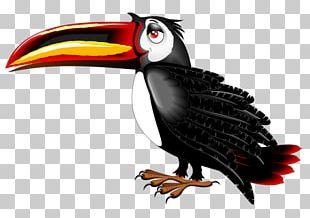 Toucan Bird Cartoon PNG