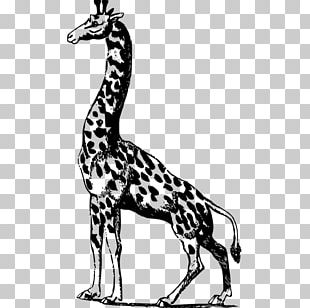 Giraffe Scalable Graphics Illustration PNG