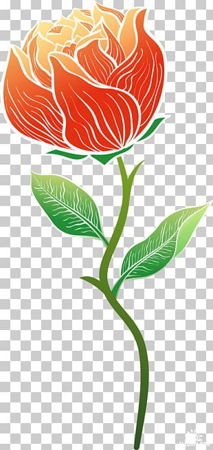 Garden Roses Cut Flowers PNG