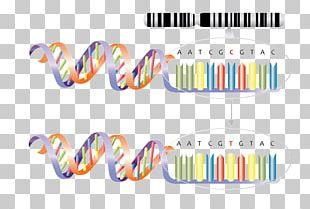 Genetics Single-nucleotide Polymorphism Mutation Genetic Variation PNG