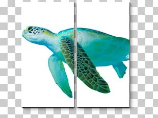 Loggerhead Sea Turtle Green Sea Turtle Hawksbill Sea Turtle PNG