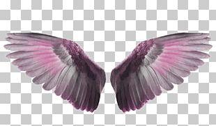 Bird Flight Wing PNG