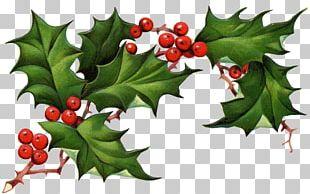 Common Holly Christmas Tree Christmas Eve PNG