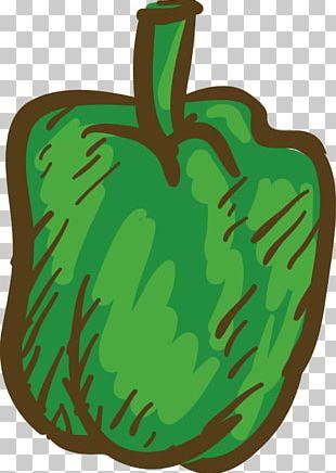 Bell Pepper Green Chili Pepper Black Pepper PNG