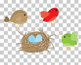 Bird Nest Domestic Canary Owl PNG
