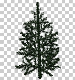 Pine Tree Fir Branch Texture Mapping PNG