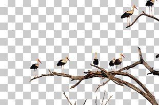 White Stork Bird Beak PNG