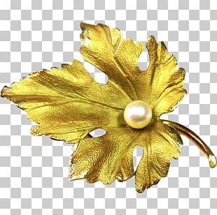 Earring Brooch Jewellery Pin Pearl PNG