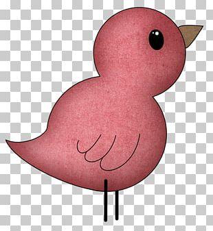 Bird Chicken Green PNG