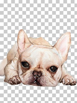French Bulldog Toy Bulldog Puppy Dog Breed PNG