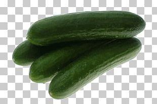 Pickled Cucumber Spreewald Gherkins European Cucumber Food PNG