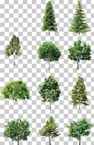 Tree Element Euclidean PNG