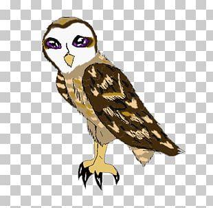 Hawk Beak Feather Wildlife PNG