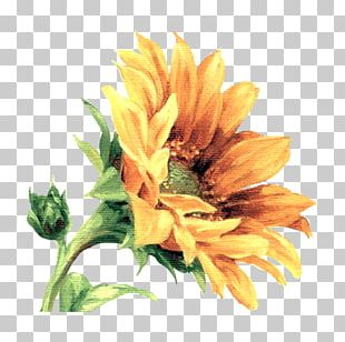 Flower Painting Floral Design Art Drawing PNG