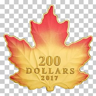 150th Anniversary Of Canada Canadian Gold Maple Leaf PNG
