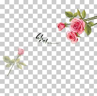 Beach Rose Flower Petal Illustration PNG