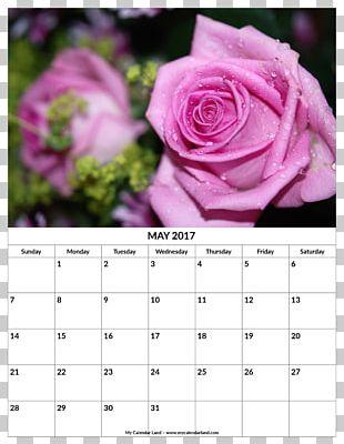 Pruning Rose Family Beach Rose Shrub PNG