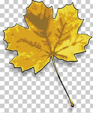 Red Maple Sugar Maple Maple Leaf PNG