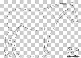 Mule American Quarter Horse Foal Mustang Friesian Horse PNG