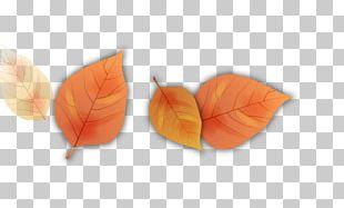 Autumn Leaf Petal Cartoon PNG