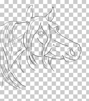 Line Art Arabian Horse Drawing Sketch PNG