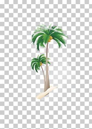 Nata De Coco Coconut Tree Arecaceae PNG