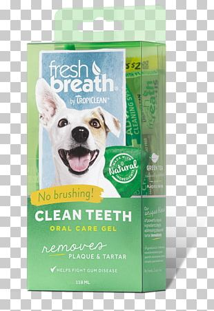 Teeth Cleaning Tooth Brushing Dental Calculus Cat Dog PNG