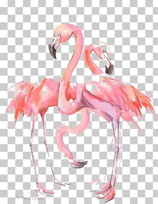 Flamingos Bird Watercolor Painting PNG