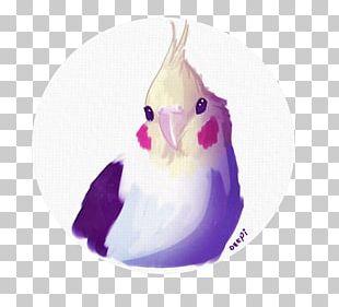 Goose Cygnini Duck Anatidae Bird PNG