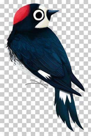 Beak Piciformes Feather PNG