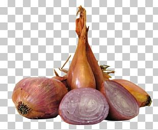 Shallot Vegetable Allium Fistulosum Yellow Onion PNG