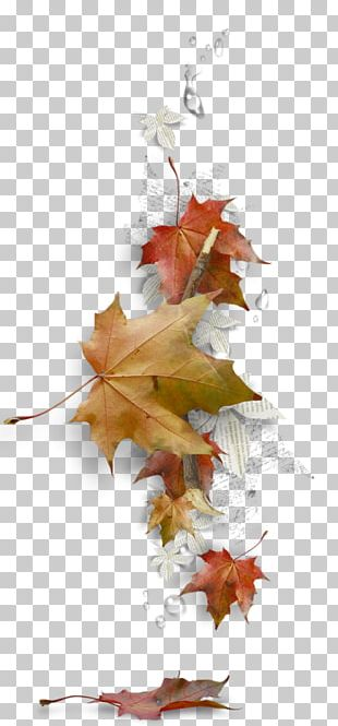 Maple Leaf Borders And Frames Autumn Leaf Color PNG