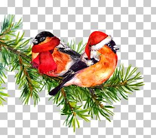 Bird Watercolor Painting Drawing Tree PNG