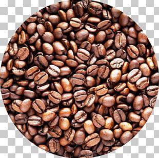 Coffee Bean Cafe Robusta Coffee Arabica Coffee PNG
